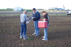 Dissipation Soil trays 2_crop