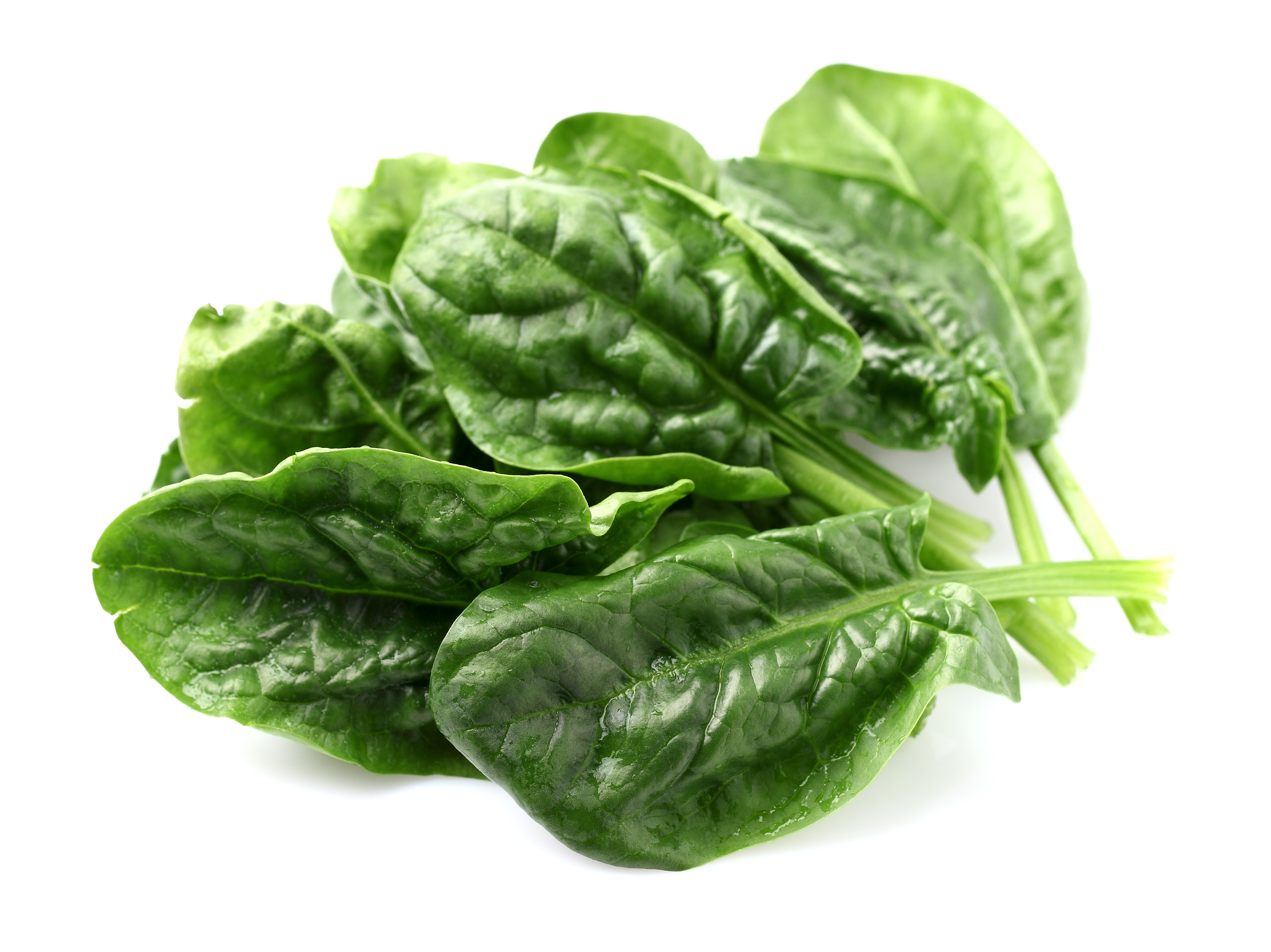 spinach leaves Spinach can be afflicted with any number of diseases, primarily fungal fungal diseases usually result in leaf spots on spinach what diseases cause spinach leaf spots.